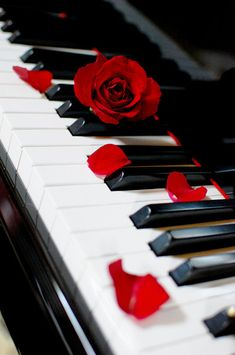 Rose-petaled piano