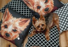 Check out these cute pillows on Lisa Mende Design: Meet Mac Meckley