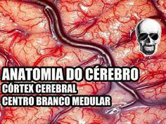 Vídeo Aula 134 - Sistema Nervoso/Neuroanatomia: Anatomia do Cérebro (Cór...