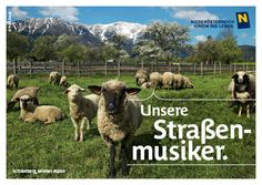 Austria, Goats, Animals, Snow Mountain, Ship It, Music Artists, Alps, Summer, Animais