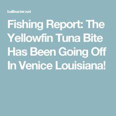 Fishing Report: The Yellowfin Tuna Bite Has Been Going Off In Venice Louisiana! Jimmy Nelson, Tuna Fishing, Yellowfin Tuna, Go Off, Fishing Report, Louisiana, Venice, Louisiana Tattoo