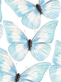 Blue Butterfly | Ella Johnston
