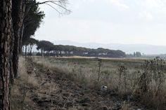 treckwoman@foto: Il Viale dei Pini a Lentini