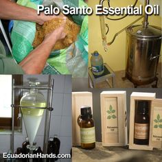 To control arthritis, arthrosis and muscle pain through massage the best option is #PaloSanto essential oil. Its aroma also helps to deepen the spiritual moments of meditation. In order to obtain this #EssentialOil a rigorous distillation process is carried out. Learn about the traceability of this artisan product. WATCH IT NOW >> https://www.ecuadorianhands.com/en/blog/27_how-is-made-the-palo-santo-essential-oil.html