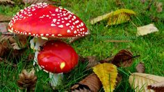 Learn how mushroom grows at :- ghttp://www.mushroomplants.co.in/
