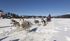 Dogsled, toboggan, pond hockey provide more ways to play in the snow