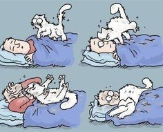 Simons cat. My cat does this all the time!