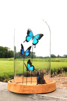 Glassdome with butterflies Bird Feeders, Snow Globes, Insects, Butterfly, Outdoor Decor, Nature, Gifts, Home Decor, Naturaleza