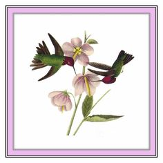 Pair of Anna Hummingbirds Bird Illustration by John James Audubon Counted Cross Stitch or Counted Needlepoint Pattern