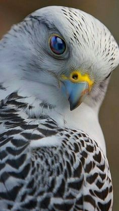 Most up-to-date No Cost birds of prey raptors Thoughts Being a birds of feed digital photographer, a vey important concern a lot of grumble regarding would be the u Pretty Birds, Beautiful Birds, Animals Beautiful, Beautiful Eyes, Nature Animals, Animals And Pets, Cute Animals, Exotic Birds, Colorful Birds