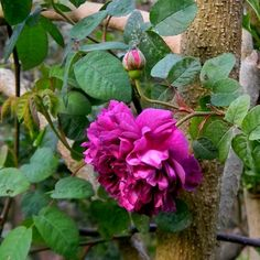 la mia giungla torna in tv–by tyziana - Furighedda gardening