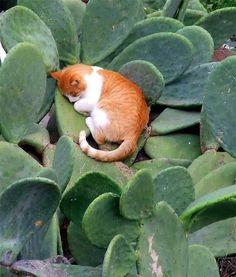 sleeping cat in the cactus
