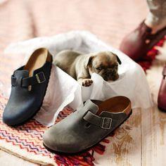 Beim Fotoshooting für Birkenstock-Schuhe hatten wir Besuch vom Mopswelpen. Süß oder? #hund #mops #fotoshooting #schuhe