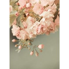 i smoke marlboro reds and drink champagne ❤ liked on Polyvore featuring backgrounds and flowers