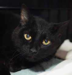 Majestic's owner couldn't take her to a new home. She's sweet and friendly and would love to meet you!