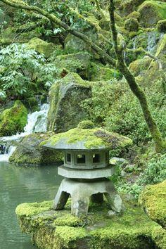 Jardin zen japonais bonsaïs asiatique pierres