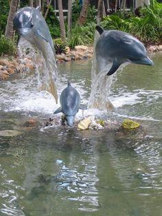 Dolphins in Daydream Island, Queensland_ East Australia Delphine in Daydream Island, Queensland_ East Australia Water Animals, Animals And Pets, Baby Animals, Underwater Creatures, Ocean Creatures, Beautiful Creatures, Animals Beautiful, Dolphin Images, The Ocean