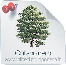 Ontano Nero - Elimina la bolletta, regala un albero - Gruppo Hera