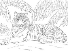 Realistic And Detailed Coloring Page Of Tiger For Older Kids ...