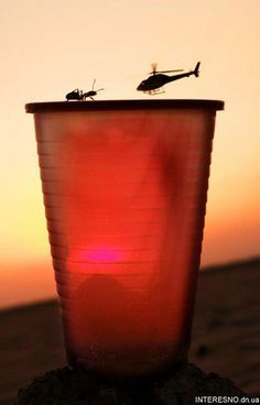 Haha..The ant will defeinately win!!...perfectly timed photos