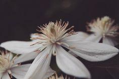 Open bloom