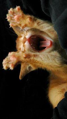 Ready for cat nap. BRIGHT MORNING: Sunday Chats