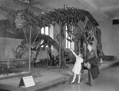Visitors viewing Brontosaurus skeleton.  American Museum of Natural History.  1937.