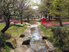 立川昭和記念公園のチューリップ