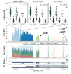 derfinder – identify, visualize, and interpret differentially expressed regions - Differential expression analysis of RNA sequencing (RNA-seq) data typically relies on reconstructing transcripts or counting reads that overlap known gene structures. Previously, researchers at Johns Hopkins Bloomberg School of Public Health introduced an intermediate approach called differentially expressed...