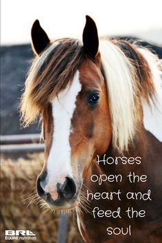 Horses open the heart and feed the soul. inspirational horse quote #BRLequinenutrition #BRLequine #truehappiness #feedyoursoul #loveyourhorse