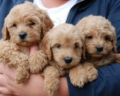 I know we said we couldn't get 1 dog. So obviously that means we should just get 3.