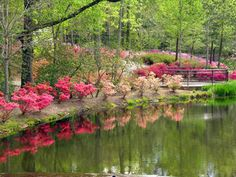 Callaway Gardens - so beautiful in the spring!