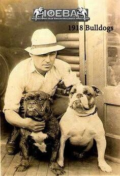 Mansfield Missouri 1918...Laura and Almanzo loved dogs, and Laura's treasured childhood dog Jack, a Bulldog, held a place in her heart and memories throughout her life.... Pit Bull, Bull Bull, Bulldog Pics, Mini Bulldog, Bulldog Images, Olde English Bulldogge, Nanny Dog, Bulldog Breeds, Bullen