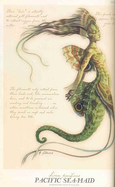 "Pacific Sea-Maid, from ""Arthur Spiderwicks Feild Guide to the Fantastical World Around You"""