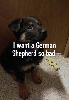 The German Shepherd German Shepherd Puppies, German Shepherds, Whisper App, Pets 3, Best Dogs, Sayings, Quotes, Animales, German Shepherd Pups