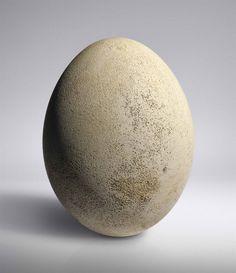 An intact elephant bird egg, Madagascar, Pre- 17th Century