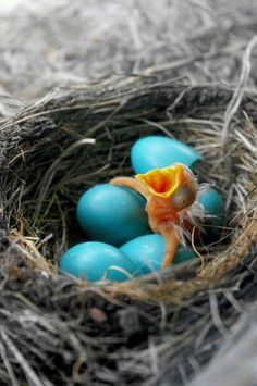 First Born Baby Bird