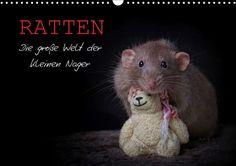 Ratten. Die große Welt der kleinen Nager - CALVENDO Kalender von Thorsten Nilson