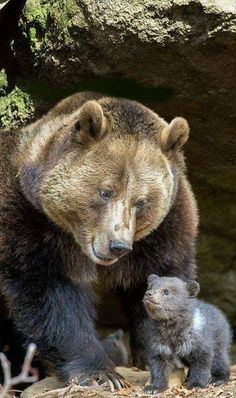 Mama bear and her cub. Her face, omg, I& never seen a bear with such a bea. - Good Ideas - Home Decor & Animal Lover - Nature Animals, Animals And Pets, Forest Animals, Beautiful Creatures, Animals Beautiful, Cute Baby Animals, Funny Animals, Mother And Baby Animals, Smiling Animals