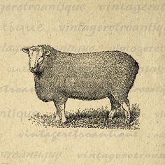 Digital Printable Antique Sheep Graphic Cute Animal Image Download Vintage Clip Art. High quality printable image. This digital artwork can be used for making prints, fabric transfers, papercrafts, tea towels, and much more. Real vintage clip art. This image is large and high quality, size 8½ x 11 inches. Transparent background PNG version included.