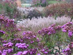 Pensthorpe Millennium Garden 09/10 - 03 by Pensthorpe Photos, via Flickr