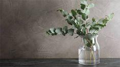 Eukalyptus ‒ krásný strom s blahodárnými účinky | Blog BAUHAUS Bauhaus, Indoor Plants, Glass Vase, Interior, Green, Home Decor, Gardening, Shop, Wedding