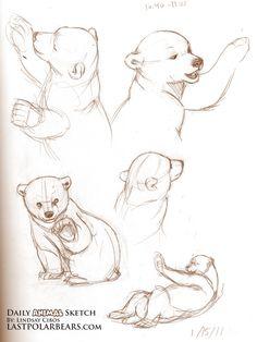 sketching brown bears | Bear Cub Sketch
