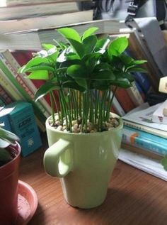 Plantez des Pépins de Citron - page 4