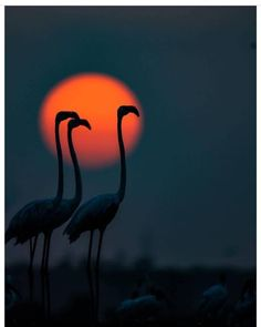 Sunset with flamingos by Beautiful Sunset, Beautiful Birds, Animals Beautiful, Beautiful Things, Flamingo Photo, All Birds, Bird Pictures, Acrylic Art, Nature Photography