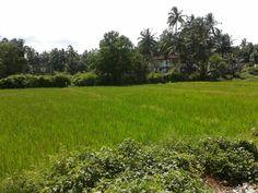 breezing farm @ goa