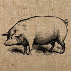 FARM PIG Vintage Digital Image Download for fabric transfers, burlap, Design 380