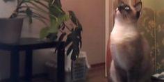 Cats: jump fails