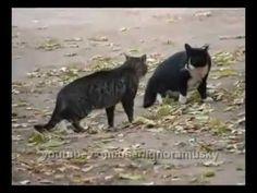 CAT ・・&