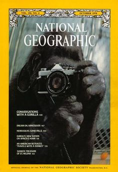 """This cover of NG magazine is entitled, """"Conversations With a Gorilla,"""" with Koko the gorilla snapping a photograph of her reflection in the mirror. The photo was of such high quality and significance that it was chosen to be the cover photo for the October 1978 NG article featuring Koko. Developmental psychologist Francine Patterson spent six years with Koko teaching her sign language and this led Patterson and other researchers to believe Koko displayed evidence of linguistic capabilities."""
